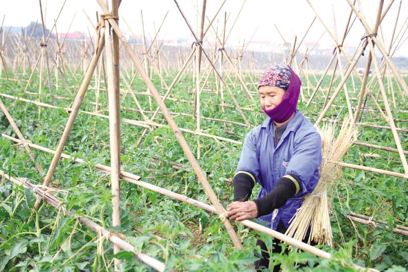 Vai trò, hiệu quả kinh tế Hợp tác xã trong xây dựng Nông thôn mới