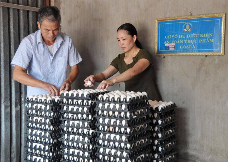 Yên Phong phát triển HTX nông nghiệp theo chuỗi giá trị