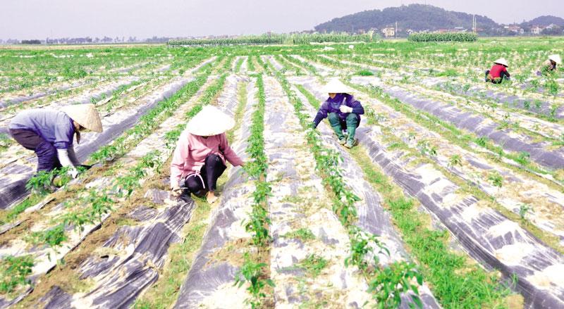 Cùng nông dân hội nhập