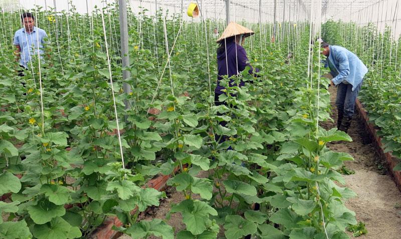 Tái cơ cấu ngành nông nghiệp trong tình hình mới